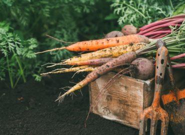 Jak urządzić własny ogródek warzywny